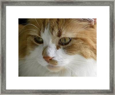 Serious Gato 3 Framed Print by Julie Palencia
