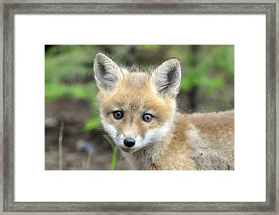 Seriously 2 Framed Print by RJ Martens