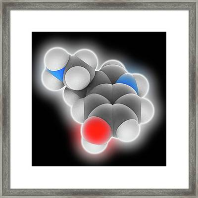 Serotonin Molecule Framed Print