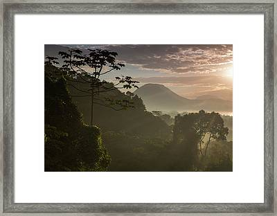 Serra Do Mar Forest In Sao Paulo State Framed Print by Alex Saberi