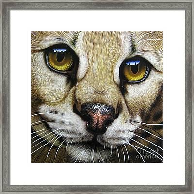 Serval Framed Print by Jurek Zamoyski