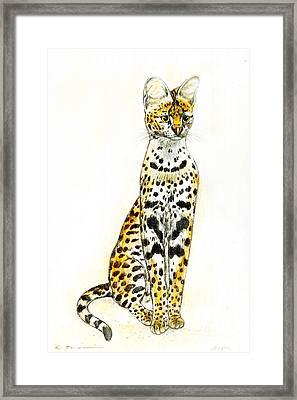 Serval Framed Print by Kurt Tessmann