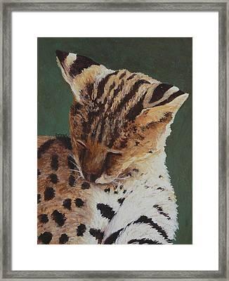 Serval Nap Framed Print