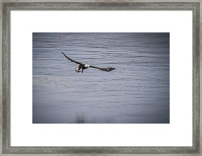 Serving Fish Framed Print by Eduard Moldoveanu