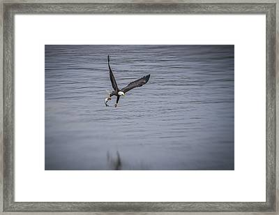 Serving Fish Take Two Framed Print by Eduard Moldoveanu