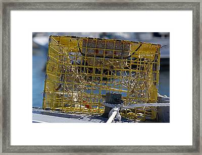 Sesuit Harbor Lobster Cage Framed Print by Juergen Roth