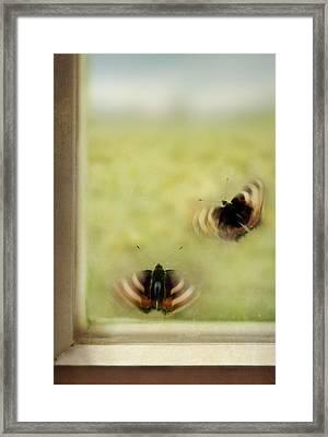 Set Us Free Framed Print by Jaroslaw Blaminsky