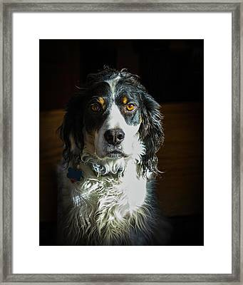 Setter In Contrast Framed Print by Andrew Lawlor