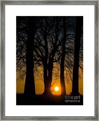 Setting Between The Trees - Wittenham Clumps Framed Print by OUAP Photography