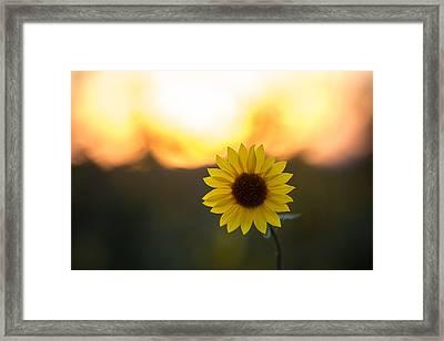 Setting Sun Flower Framed Print by Peter Tellone