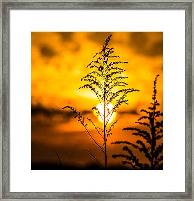 Setting Sun Framed Print by Parker Cunningham