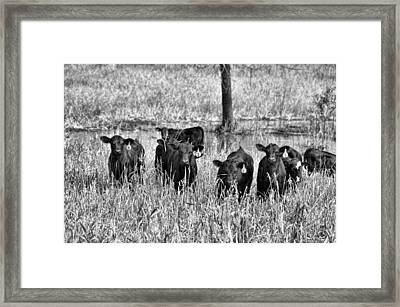 Eight Babies Framed Print