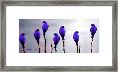 Seven Birds Of Purple Framed Print by Bruce Nutting
