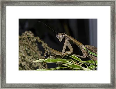 Sexy And I Know It Framed Print by Judy Wolinsky