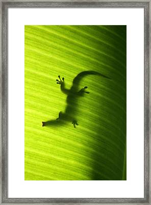 Seychelles Small Day Gecko Framed Print by Fabrizio Troiani