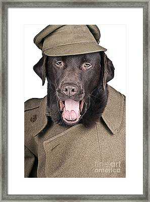 Sgt Dog Shouting His Orders Framed Print by Justin Paget