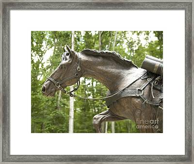 Framed Print featuring the photograph Sgt Reckless by Carol Lynn Coronios