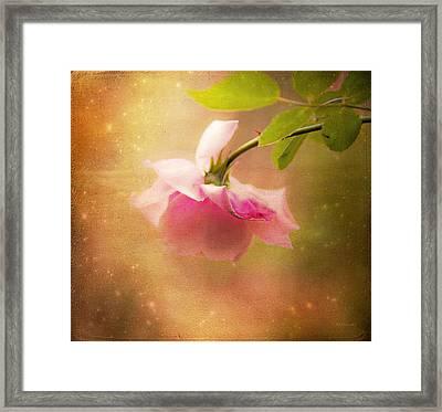 Shabby Chic Rose Print Framed Print by Theresa Tahara