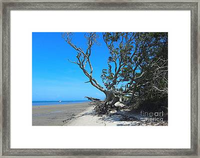 Shackleford Banks Tree 2 Framed Print