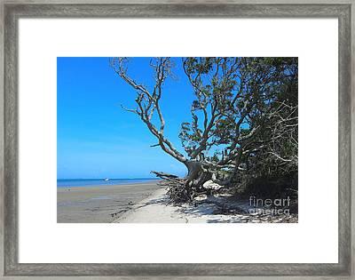 Shackleford Banks Tree 2 Framed Print by Cathy Lindsey