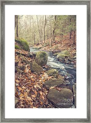 Shade Of November Framed Print by Evelina Kremsdorf