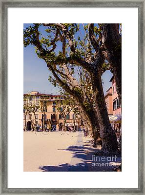 shade of the pollarded trees in the Piazza Napoleone Lucca Tusca Framed Print