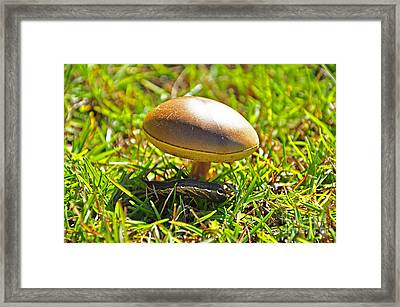 Shade Of The Shroom Framed Print by Al Powell Photography USA