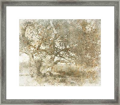 Shade Tree Framed Print by Brett Pfister