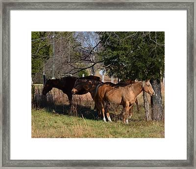 Shade Tree Horses - 51008441b  Framed Print by Paul Lyndon Phillips