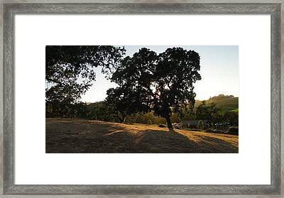 Framed Print featuring the photograph Shade Tree  by Shawn Marlow