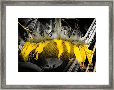 Shaded Sunflower Framed Print