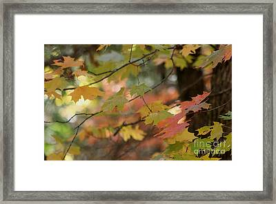Shaded Wood Framed Print