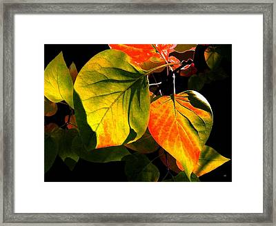 Shades And Shadows Framed Print by Will Borden