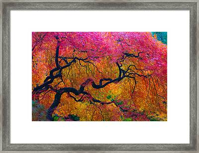 Shades Of Autumn Framed Print by Patricia Babbitt