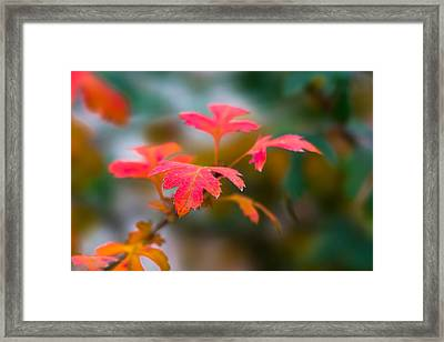 Shades Of Autumn - Red Leaves Framed Print by Alexander Senin