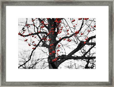 Shades Of Autumn - Reds And Blacks Framed Print by Alexander Senin