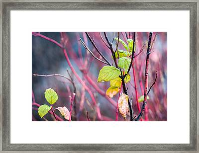 Shades Of Autumn - Reds And Greens Framed Print by Alexander Senin