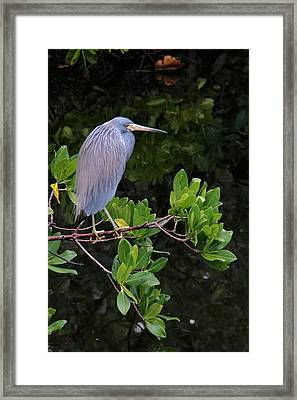 Shades Of Blue And Green Framed Print