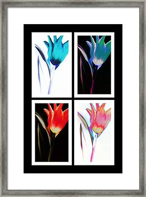 Shades Of Colour  Framed Print