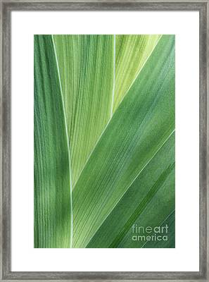Framed Print featuring the photograph Shades Of Green #2 by Judy Whitton