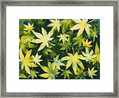 Shades Of Green Framed Print by Mary Giacomini