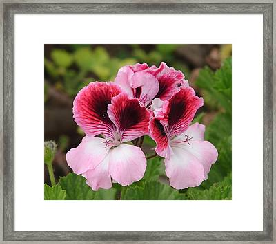 Framed Print featuring the photograph Shades Of Pink 2 by Lew Davis
