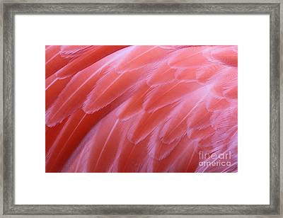 Shades Of Pink #3 Framed Print