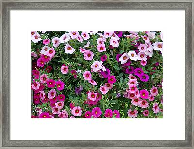 Shades Of Pink Framed Print by Aimee L Maher Photography and Art Visit ALMGallerydotcom