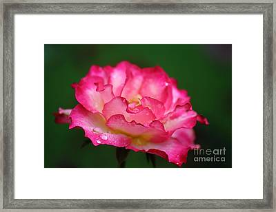 Shades Of Pink Framed Print