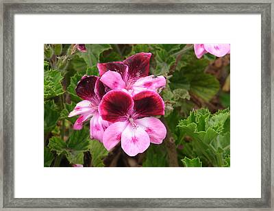 Framed Print featuring the photograph Shades Of Pink by Lew Davis