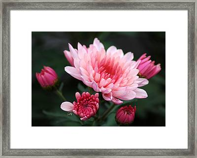 Framed Print featuring the photograph Shades Of Pink by Sami Martin