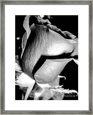 Shades Of Rose Framed Print by Nina Ficur Feenan