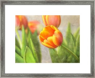 Shades Of Spring Framed Print
