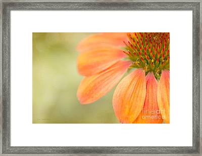 Shades Of Summer Framed Print by Beve Brown-Clark Photography